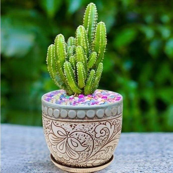 100pcs Cactus Seeds Real Prickly Pear Succulent Plant Seeds Lithops Bonsai Planting for Diy Home Garden Supplies Potted