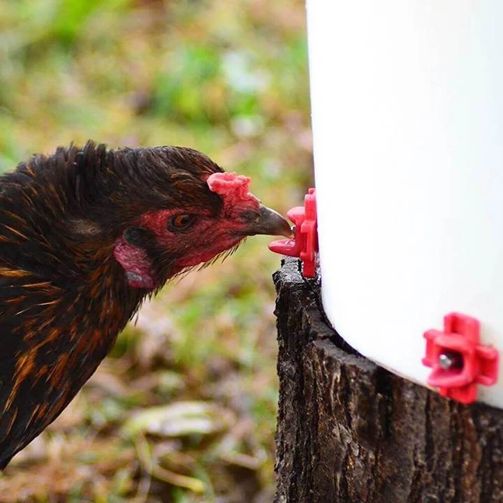 🎉BUY MORE SAVE MORE🎉Horizontal Side Mount Chicken Waterer
