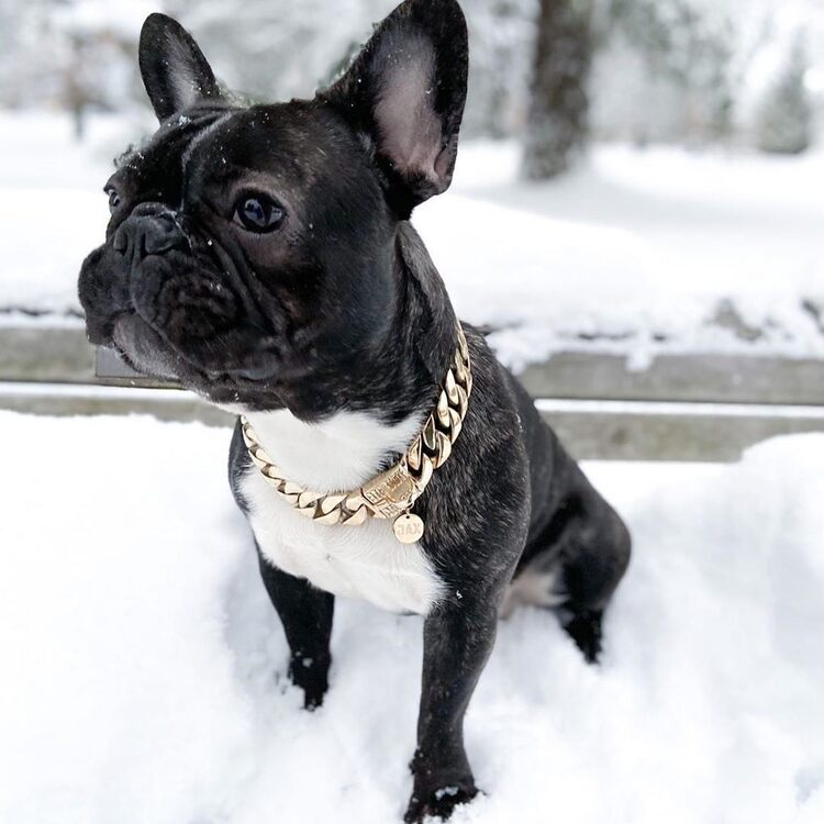 【Happy New Year Promotion-Buy 1 Get 1 FREE】Thick Gold Chain Pets Safety Collar (Adjustable Length)