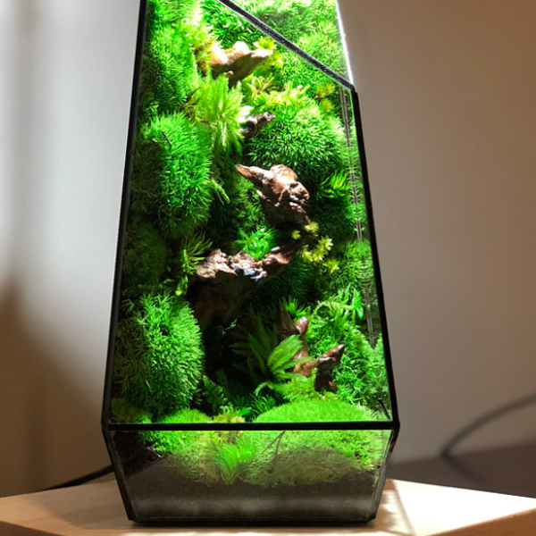 Mini Ecosphere Glass Container
