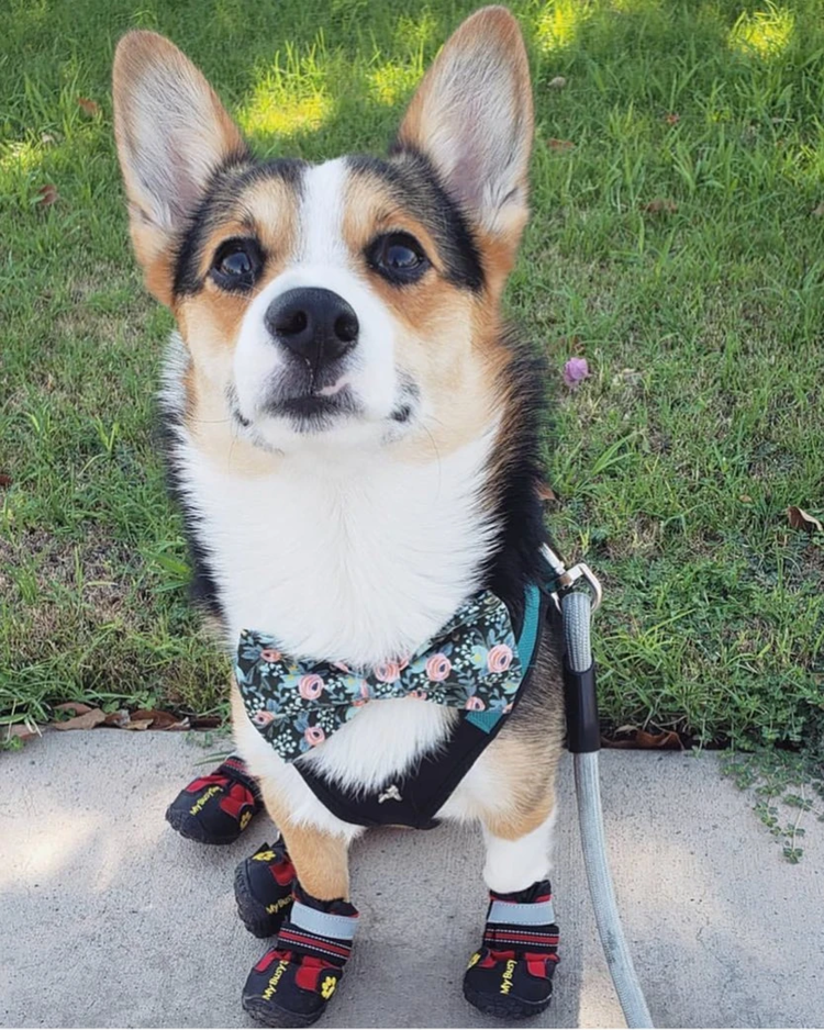 🎅40% off Christmas sale🧦(Buy 2 Free Shipping)-SECURE DOG BOOTS